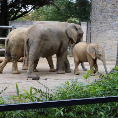 ausflug_zoo_2_web